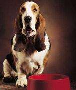 A dog with a dog bowl