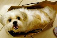 A dog in a shopping bag