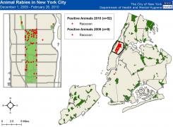 A map of rabies incidents in New York City