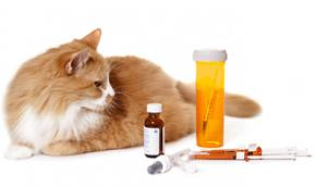A cat with medications