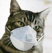 comedic image of a cat with a face mask photoshopped over it's mouth