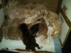 A mother cat with kittens