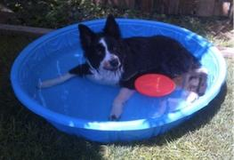 a dog laying down in a mini plastic pool filled with water