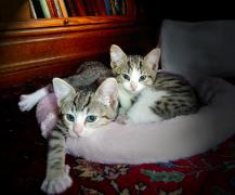 two kittens cuddled up in a cat bed