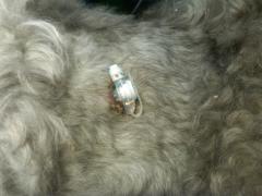 A feeding tube in a dog