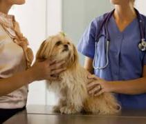 A dog being examined by veterinary professionals
