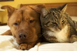 Cancer in Dogs and Cats - Animal Medical Center