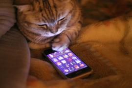 a cat looking down at a smartphone with apps on screen, cat has paw near the phone as if it were using it