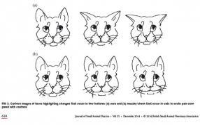 A diagram of cat facial expressions