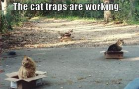 cats sitting in boxes