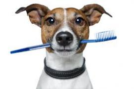 A dog holding a toothbrush in its mouth