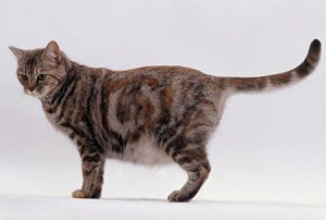 cats | animal medical center