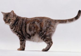 A cat with its tail straight out