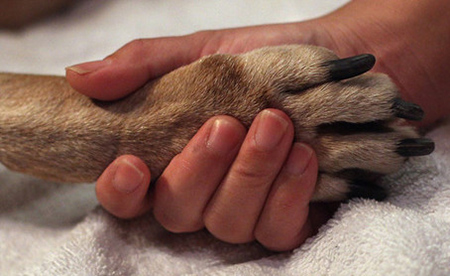A hand holding a dog's paw
