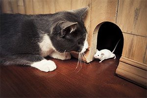 A cat playing with a mouse