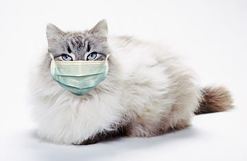 A cat wearing a medical mask