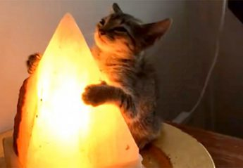 A cat investigating a crystal lamp