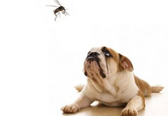 A dog stares at a mosquito