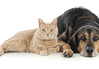 A dog and a cat lying next to each other