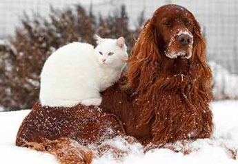 A dog and a cat in the snow