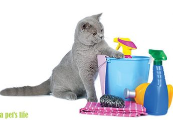 A cat investigates a pile of cleaning supplies