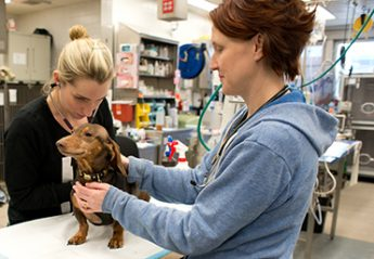 Two veterinary professionals examine a dog