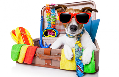 A dog wearing sunglasses in a suitcase