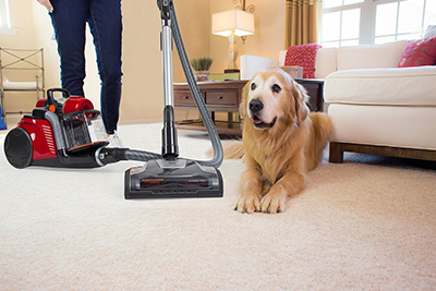 A dog next to a vacuum cleaner