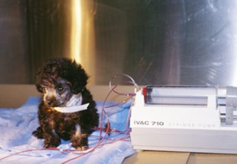 Puppy hooked up to fluid pumps