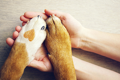 A pair of hands holds a pair of paws