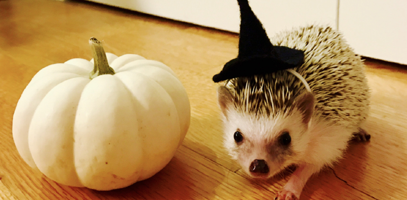 Lucy the hedgehog in a witch hat next to a pumpkin