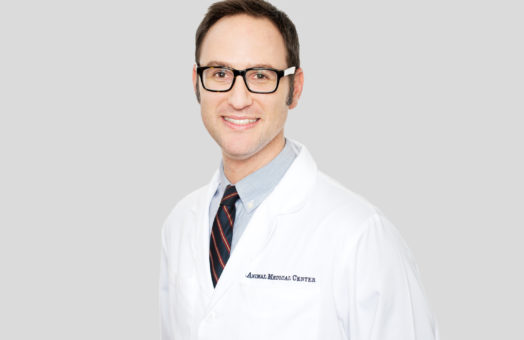 Dr. Daniel Spector of the Animal Medical Center in New York City