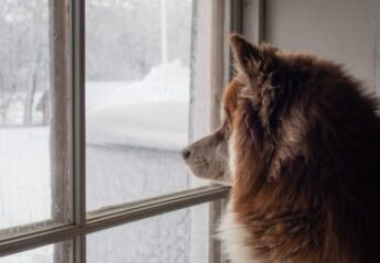 A dog looks at snow out of a window