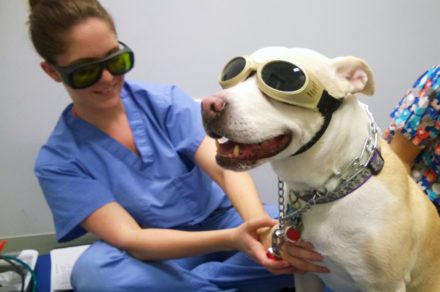 A medical professional and a dog sit side by side with each wearing sunglasses