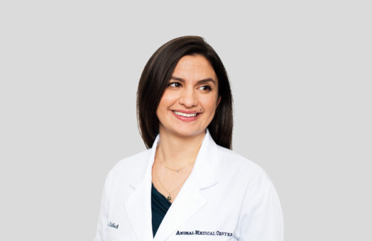 Dr. Jessica Wallach of the Animal Medical Center in New York City
