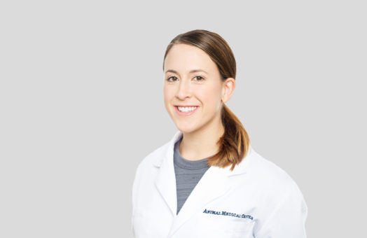 Dr. Nili Uhrman of the Animal Medical Center in New York City