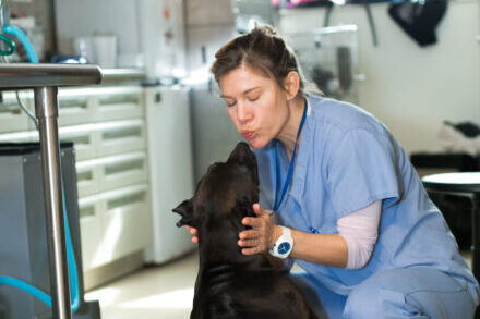 A veterinary professional is about to kiss a dog on the nose