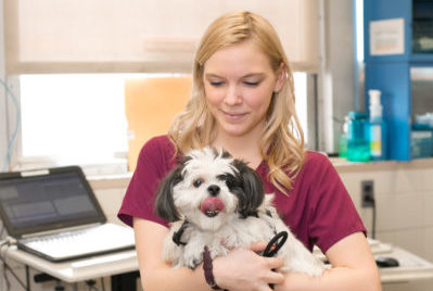 An employee of New York City's Animal Medical Center holds a small, happy dog