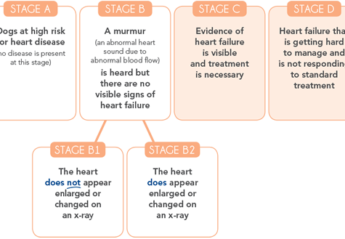 An infographic outlining the four stages of canine heart disease
