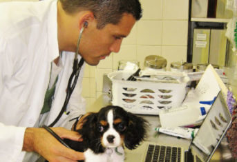 The Animal Medical Center's Dr. Doug Palma examines a dog with a stethoscope