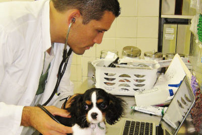 distemper shot for dogs what does it do