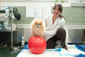 A smiling doctor crouches next to a small dog perched atop an exercise ball