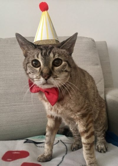 Jake, an 18-year-old cat