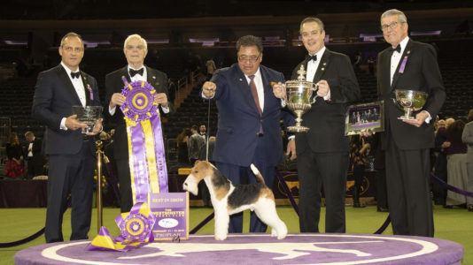 Presentation of Best-in-Show at the Westminster Dog Show