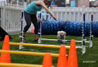A dog playing on an obstacle course