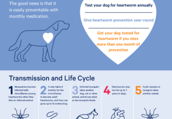 An infographic providing information about heartworm in dogs
