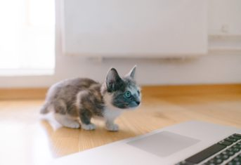 A kitten looking at a laptop computer