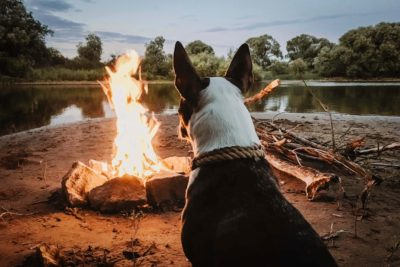 Dog Staring at a Fire