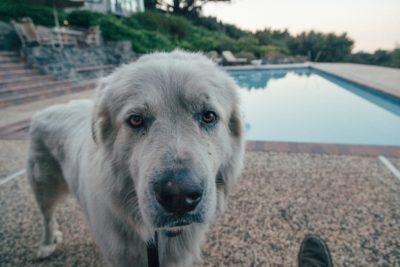 A dog lingers by a pool