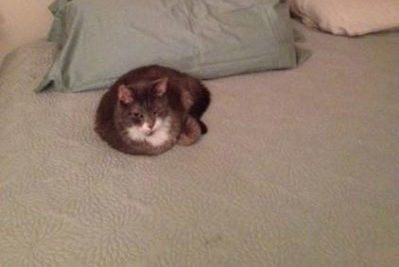 Two senior cats lie on a bed